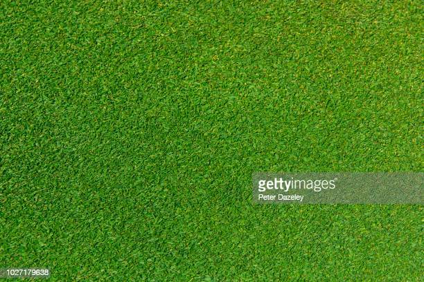 close up of grass lawn - turf stock pictures, royalty-free photos & images