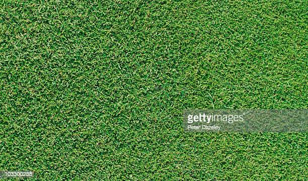 Close up of grass on golf green