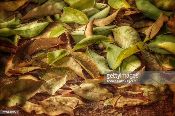 Close Up Of Green And Brown Leaves