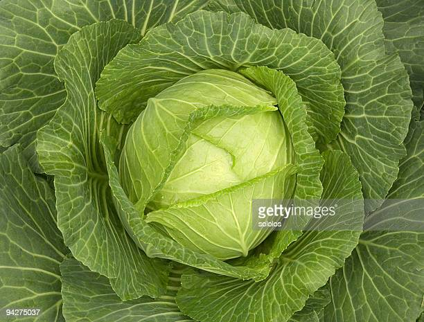 Close up of green cabbage leaves