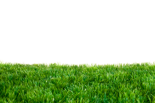Close up of green grass with white background 174670507
