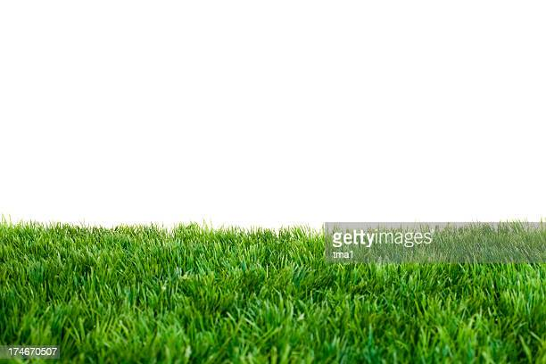 close up of green grass with white background - fake stock pictures, royalty-free photos & images