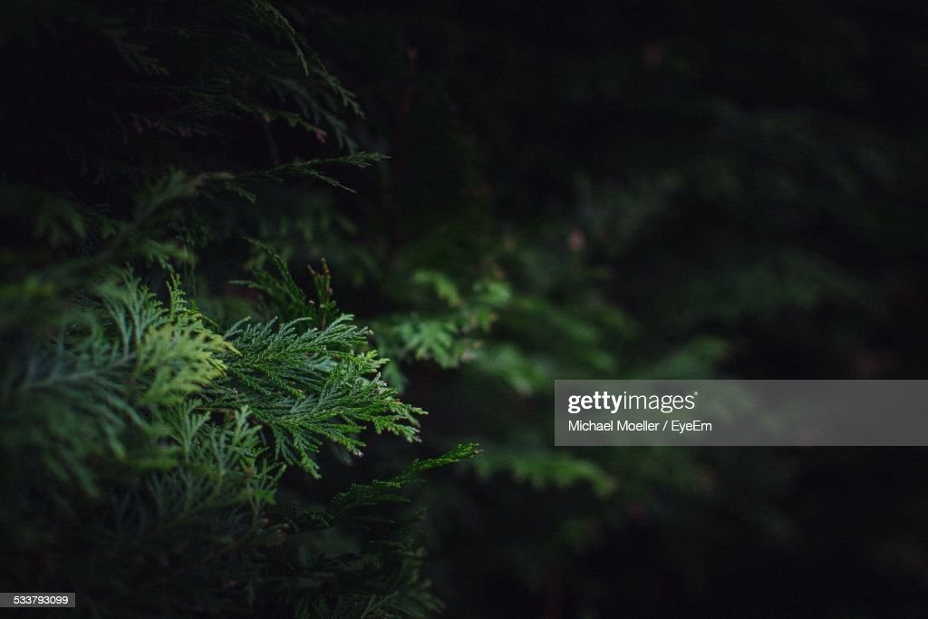 Close Up Of Green Leaves : Foto stock