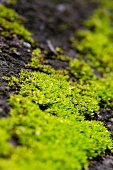 close up green moss nature background