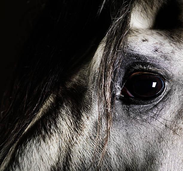 Close up of grey horse eye