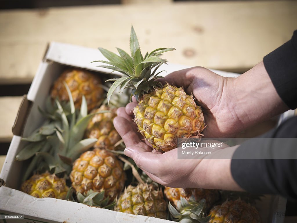 Close up of grocer holding pineapple : Stock Photo