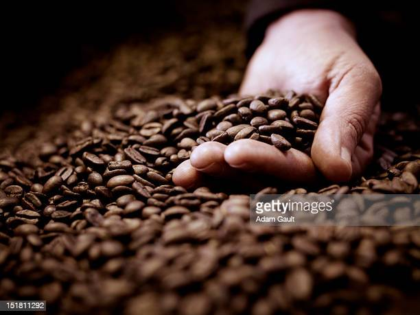 close up of hand cupping coffee beans - roasted coffee bean stock photos and pictures