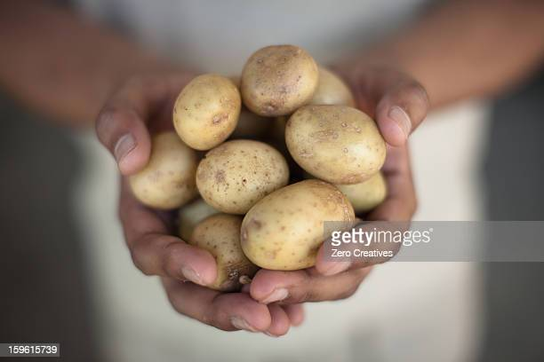 Close up of hands holding potatoes