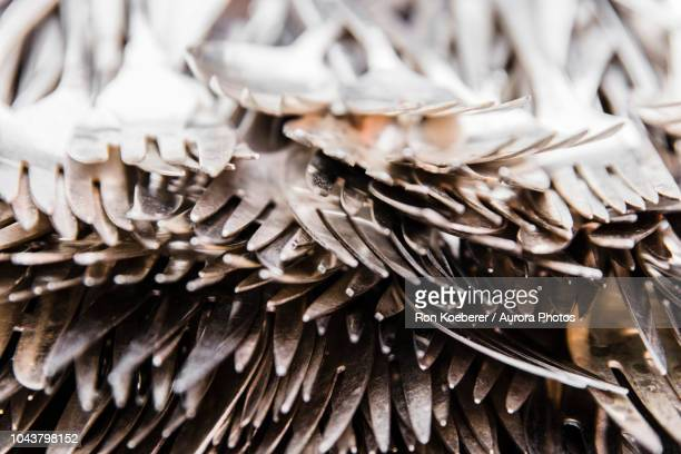 close up of heap of silver forks - koeberer stock photos and pictures
