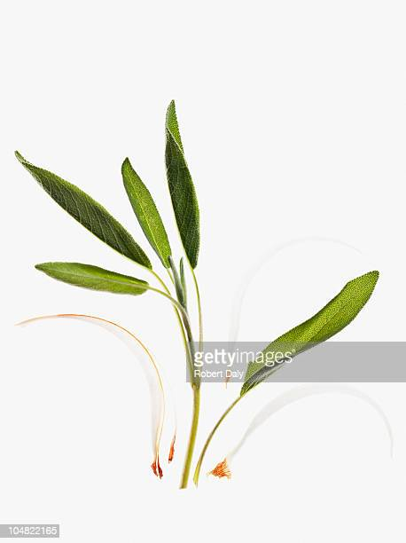 close up of herbs - green leafy vegetables stock pictures, royalty-free photos & images