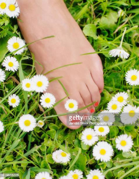 close up of hispanic woman's polished toenails in field of flowers - pretty toes and feet stock pictures, royalty-free photos & images