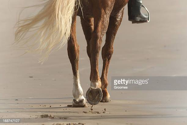 Close up of horse's hooves walking on sandy beach