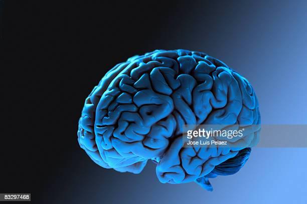 Close up of human brain