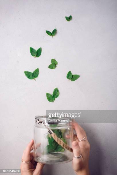 close up of human hands holding a jar of butterflies - grupo mediano de animales - fotografias e filmes do acervo