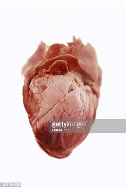 Close up of human heart viewed from front