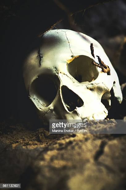 Close Up Of Human Skull