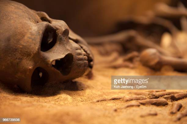 close up of human skull - arqueologia - fotografias e filmes do acervo