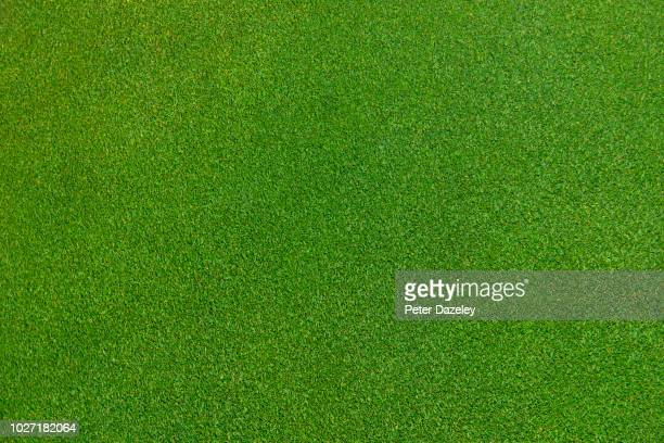 close up of immaculate grass lawn - pelouse photos et images de collection