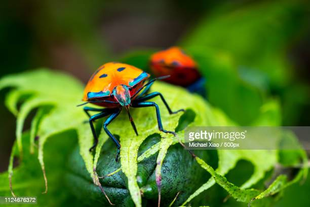 close up of ladybug on leaf - insect stock pictures, royalty-free photos & images