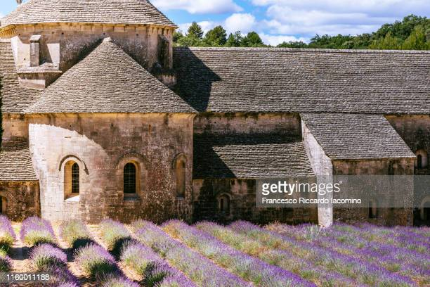 close up of lavender fields in full bloom in late june in front of abbaye de senanque abbey, provence, france - francesco riccardo iacomino france foto e immagini stock