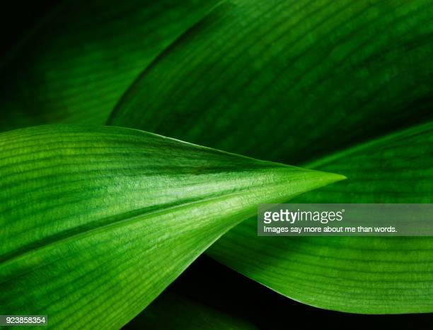 close up of leaf pattern - extreme close up stock pictures, royalty-free photos & images