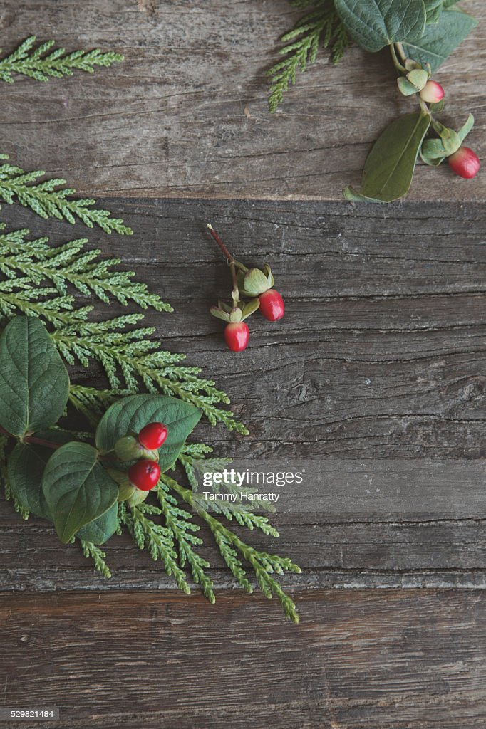 Close up of leaves and berries on wood : Foto de stock