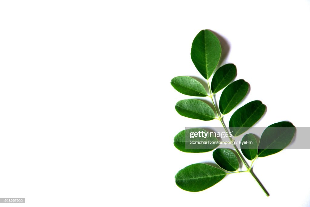 Close Up Of Leaves Over White Background : Stock-Foto