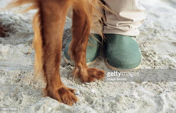 Close up of legs of person and dog