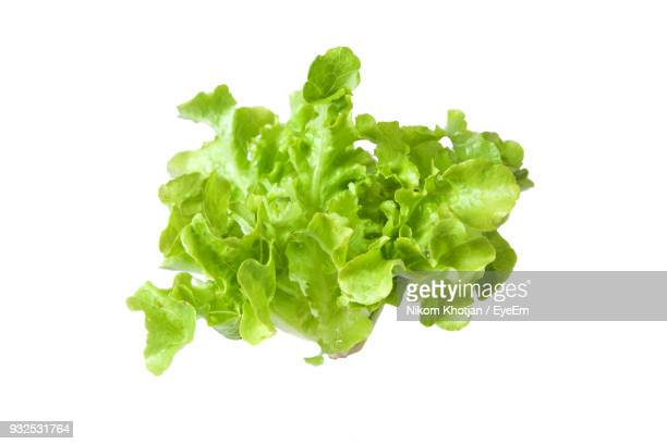 close up of lettuce on white background - lettuce stock pictures, royalty-free photos & images