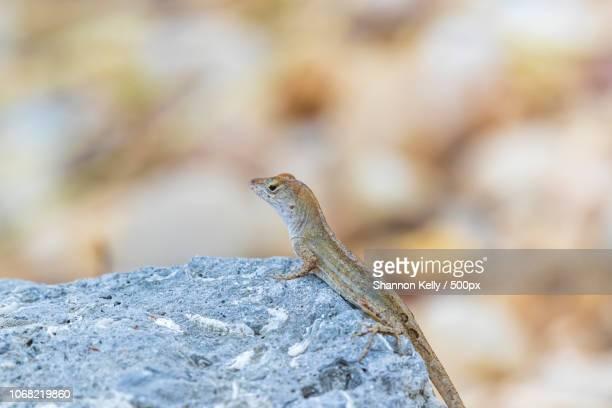 Close up of lizard standing on rock, looking away