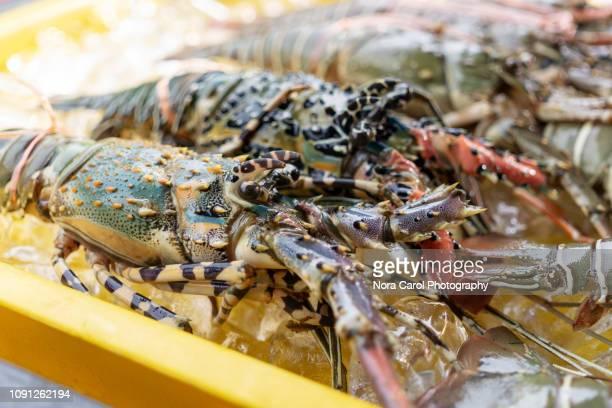 close up of lobster - サバ州 ストックフォトと画像