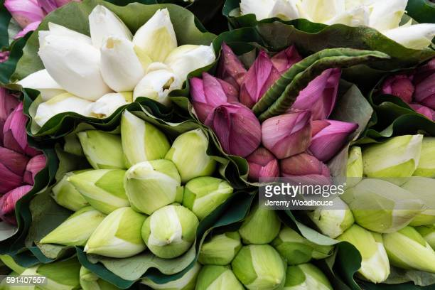 Close up of lotus flower buds for sale in market