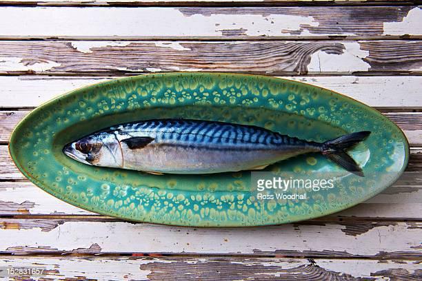 close up of mackerel on plate - mackerel stock pictures, royalty-free photos & images