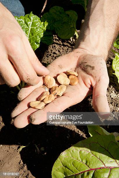 Close up of man holding seeds, hand only