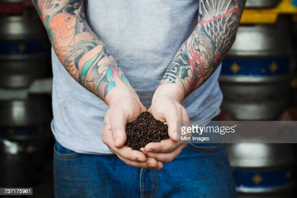 Close up of man standing in a brewery, holding some dark brown malt, tattooed arms.