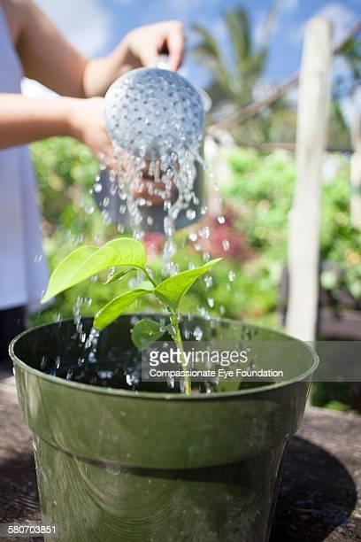 close up of man watering  plant - パホア ストックフォトと画像