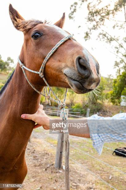 close up of mans arm holding a horse - female hairy arms stock photos and pictures