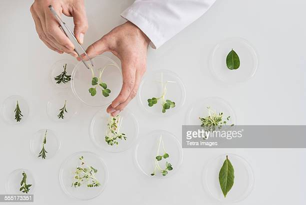 close up of mans hand preparing plants in laboratory - petrischale stock-fotos und bilder
