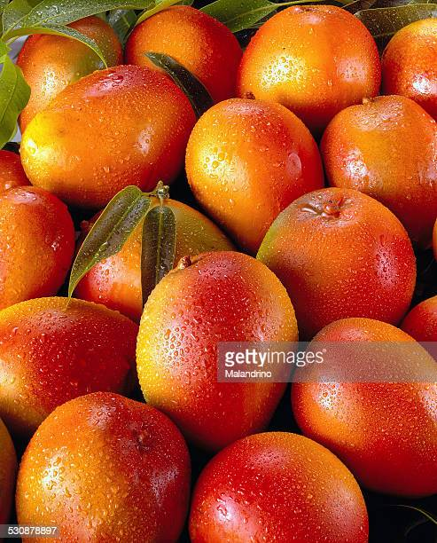 Close up of many mangoes with waterdrops