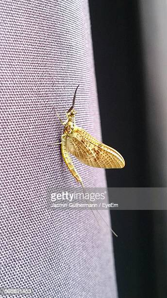 close up of mayfly - mayfly stock pictures, royalty-free photos & images