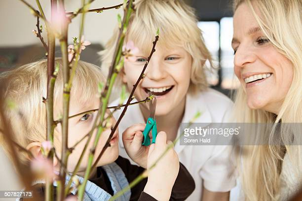 Close up of mid adult mother and two sons trimming blossom twigs in sitting room