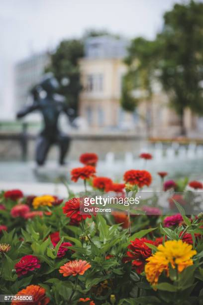 Close up of multi colored dahlia flowers and defocused statue in the background