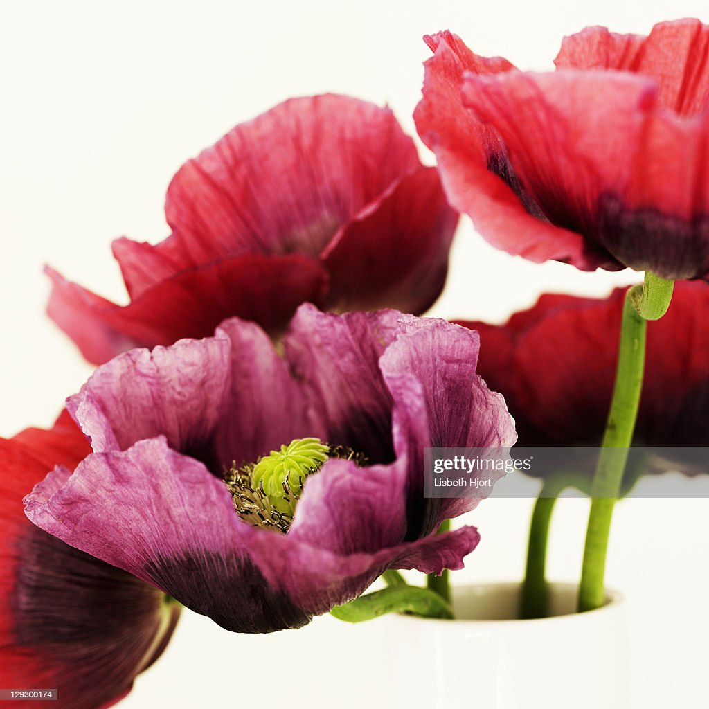 Close up of multicolored flowers : Stock Photo