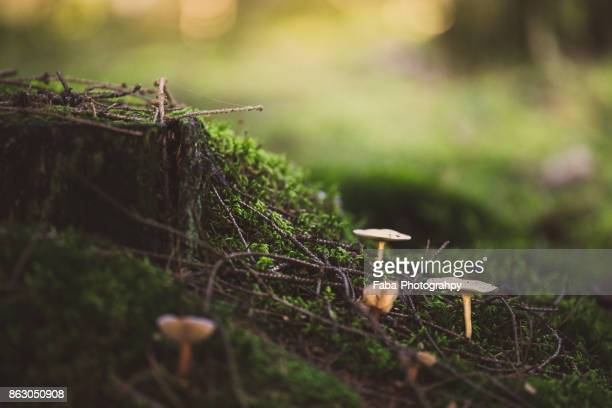 Close Up Of Mushroom