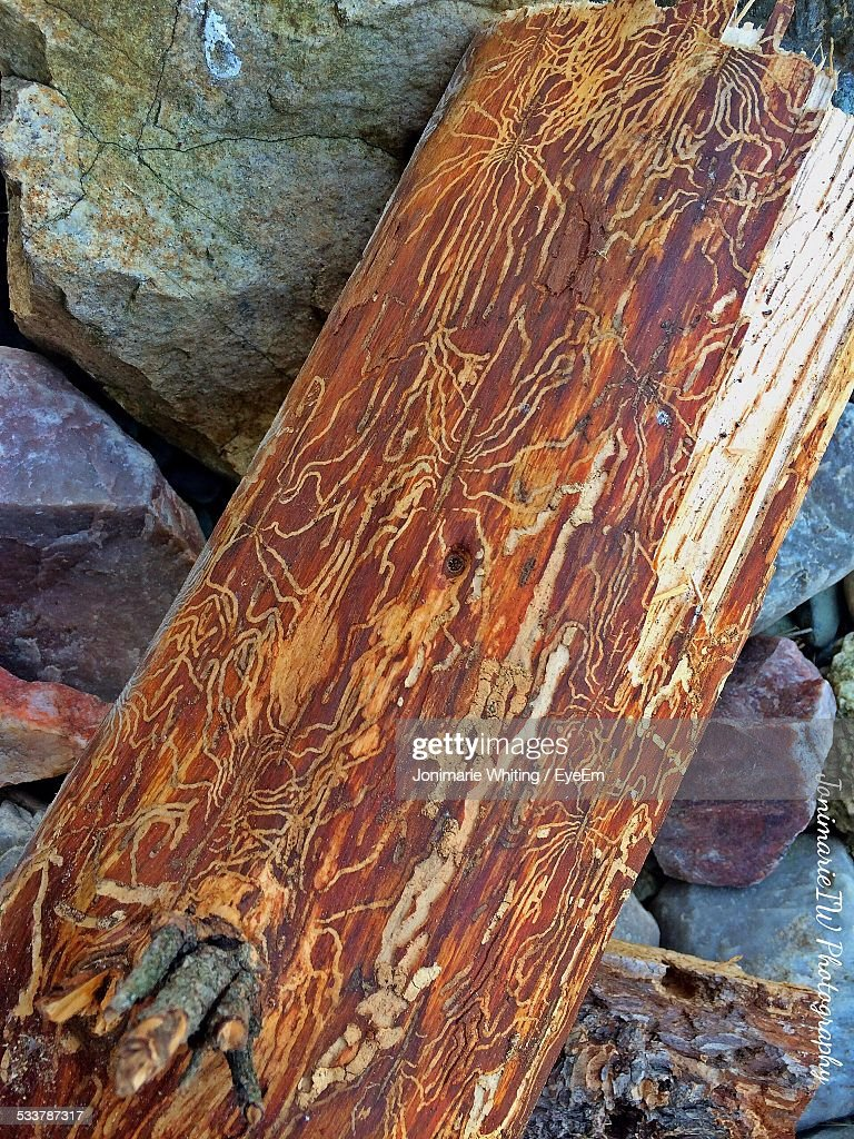 Close Up Of Natural Pattern On Wood : Foto stock