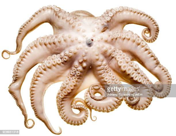close up of octopus on white background - tentacle stock pictures, royalty-free photos & images