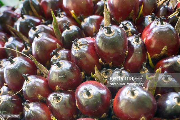 Close up of Oil Palm Fruit