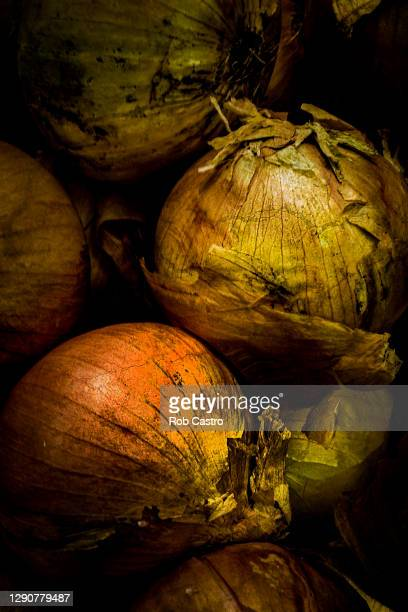 close up of onions - rob castro stock pictures, royalty-free photos & images