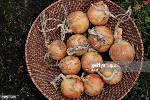 Close up of organic onions in basket