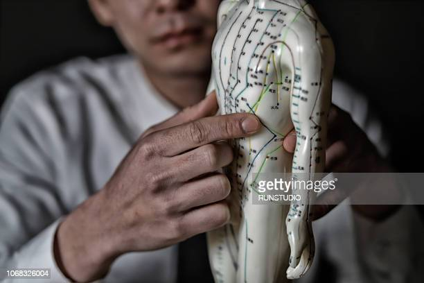 Close up of oriental medical doctor pointing at acupuncture point on model